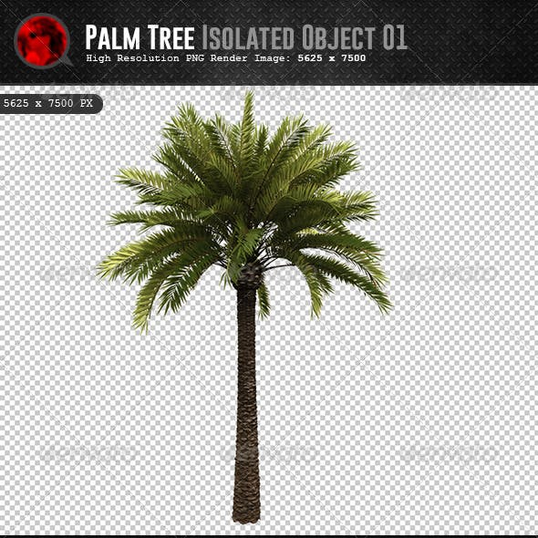 Palm Tree Isolated Object