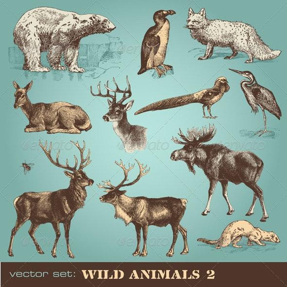 Vector Set: Wild Animals (2) - Nature Conceptual