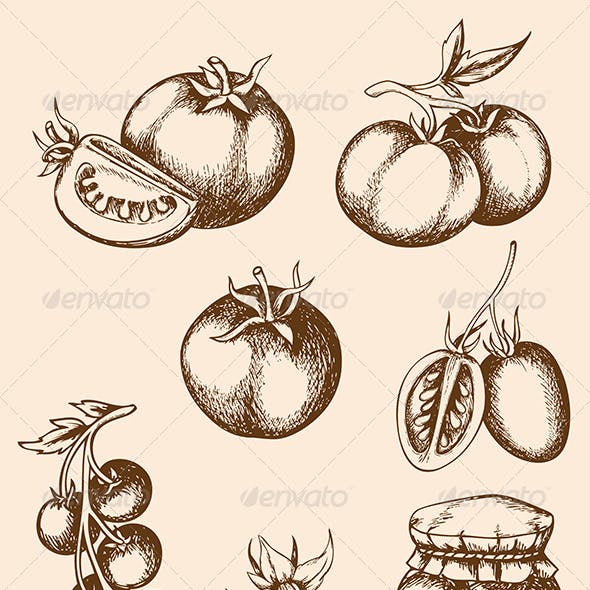 Vintage Vector Tomatoes