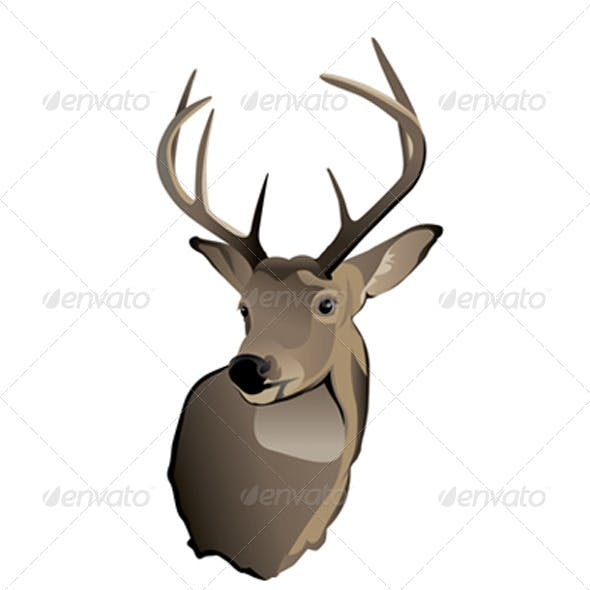 Vector Trophy Whitetail Deer Buck