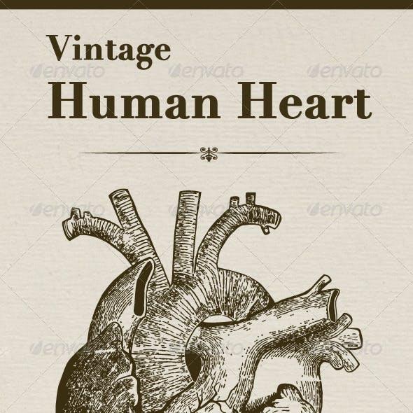 Vintage Human Heart