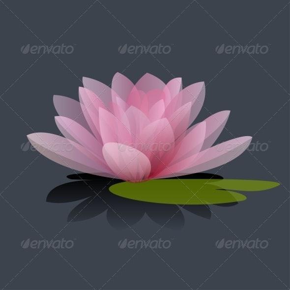 Lotus Flower Vector Illustration - Flowers & Plants Nature