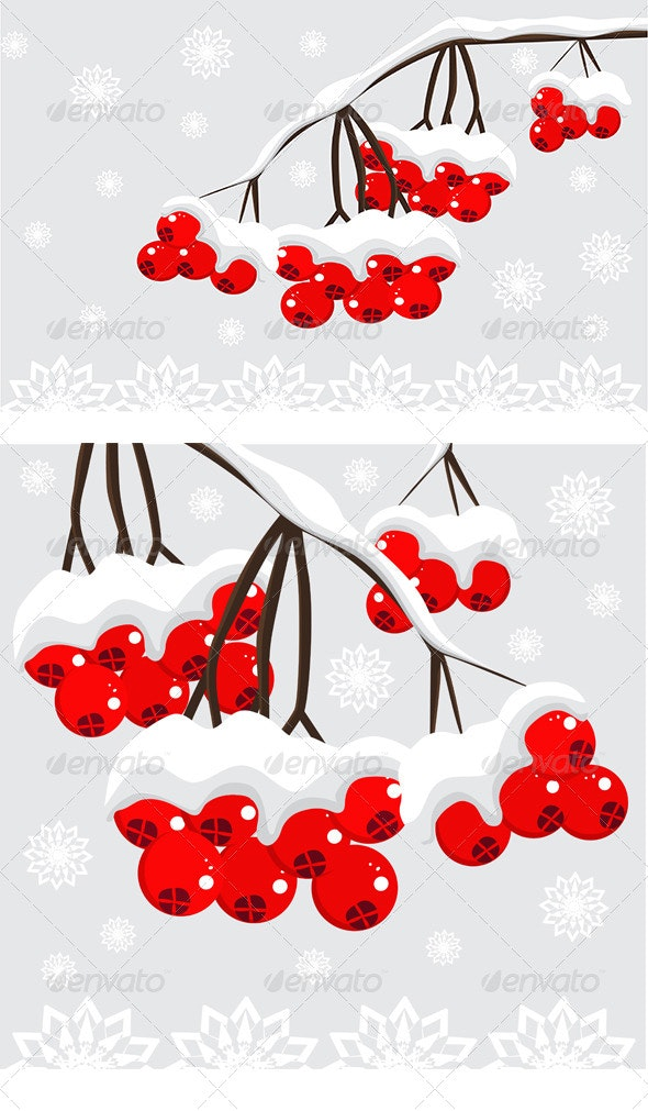 Winter background with red berries and snow  - Seasons/Holidays Conceptual