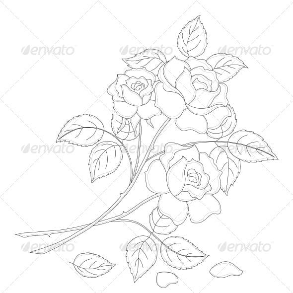 Rose Contour