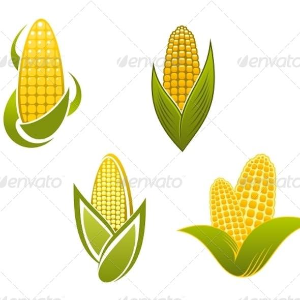 Yellow Corn Icons and Symbols