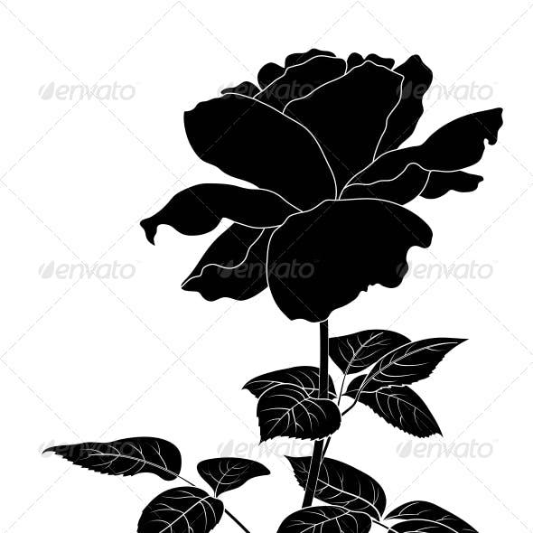 Flower Rose, Silhouette