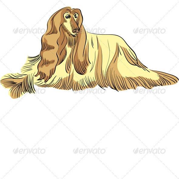 Vector dog Afghan hound breed color