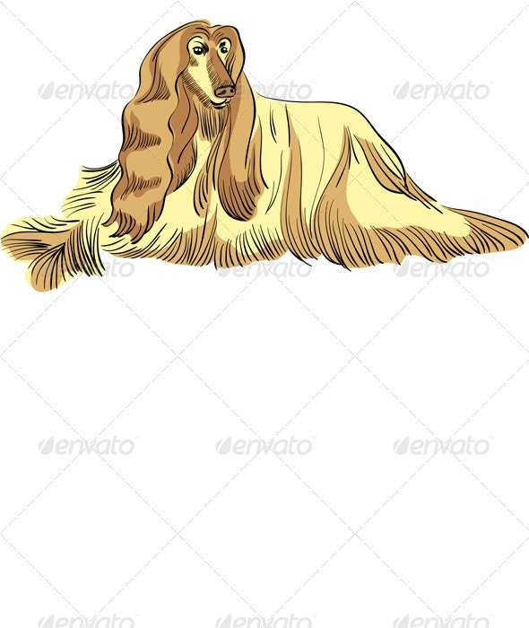 Vector dog Afghan hound breed color - Animals Characters