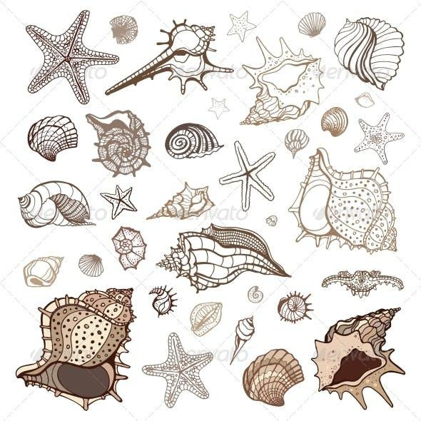 Sea Shells Collection.