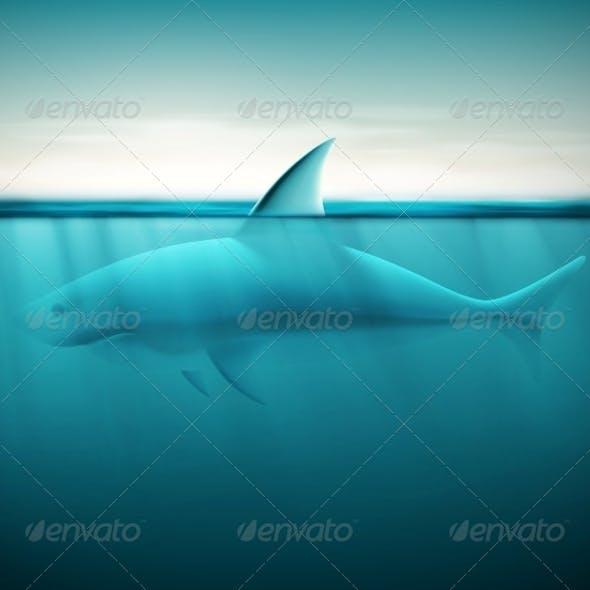 Shark in Ocean