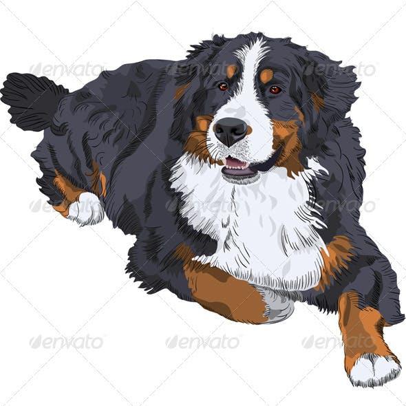 Vector Bernese Mountain Dog breed