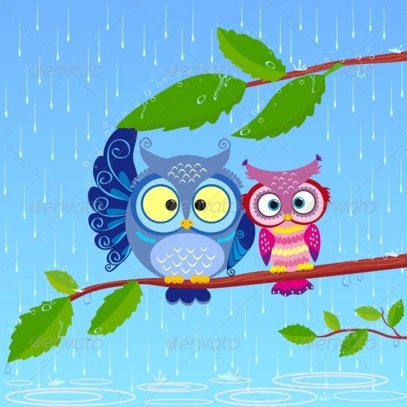 Owls in Rain