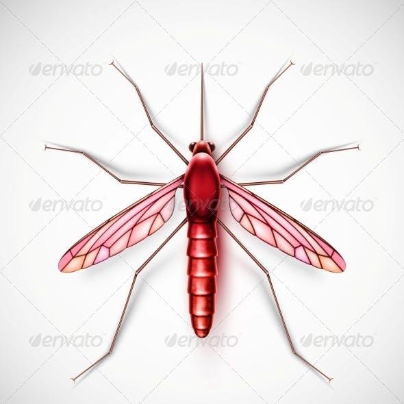 Isolated Mosquito