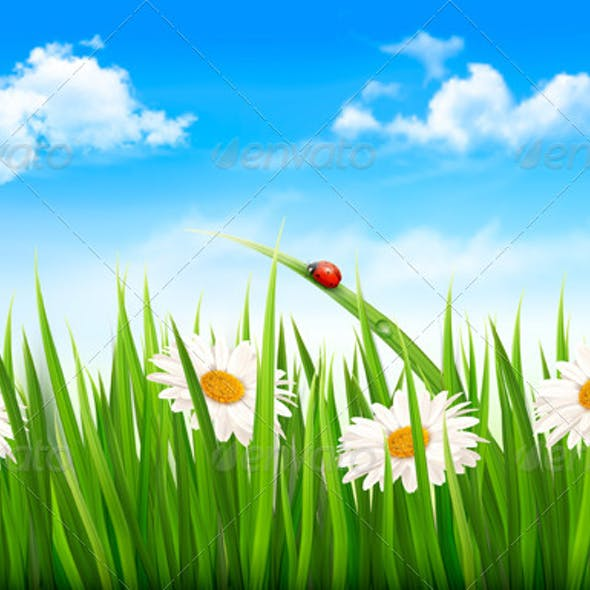 Nature Background with Green Grass, Flowers