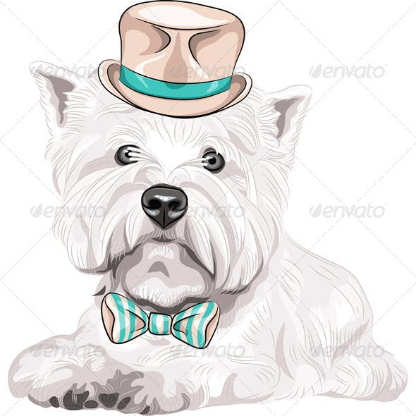 Dog West Highland White Terrier