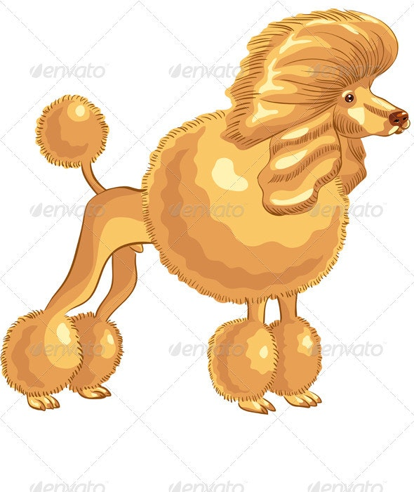 Vector color sketch of the dog red Poodle breed - Animals Characters