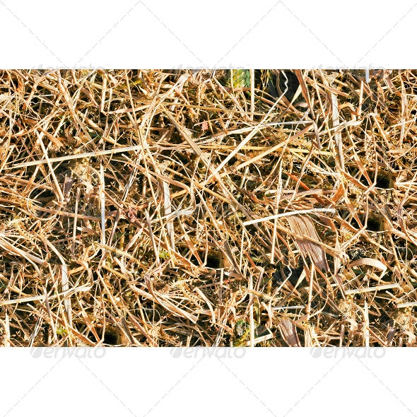 Tileable Forest Ground - Grass Texture - Fabric Textures