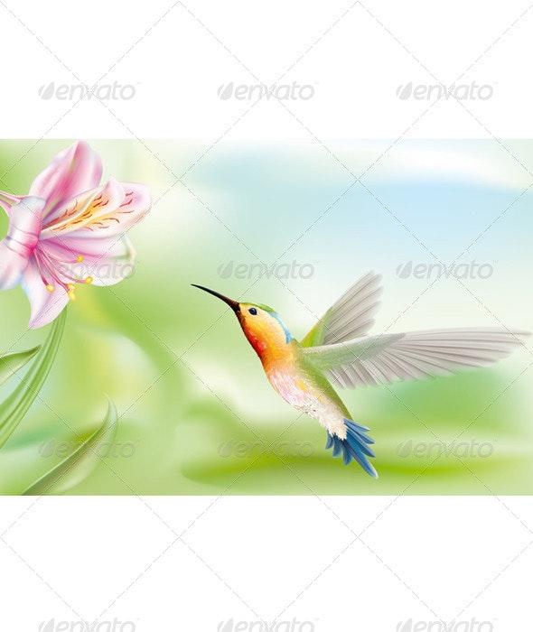 Hummingbird - Animals Characters