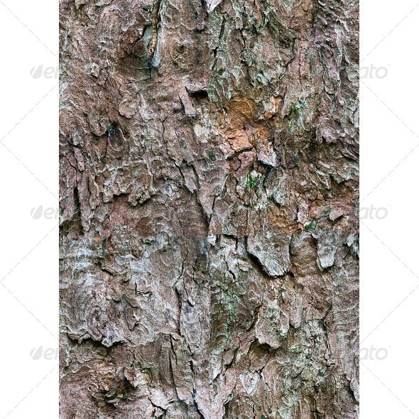 Tileable Bark Tree Texture