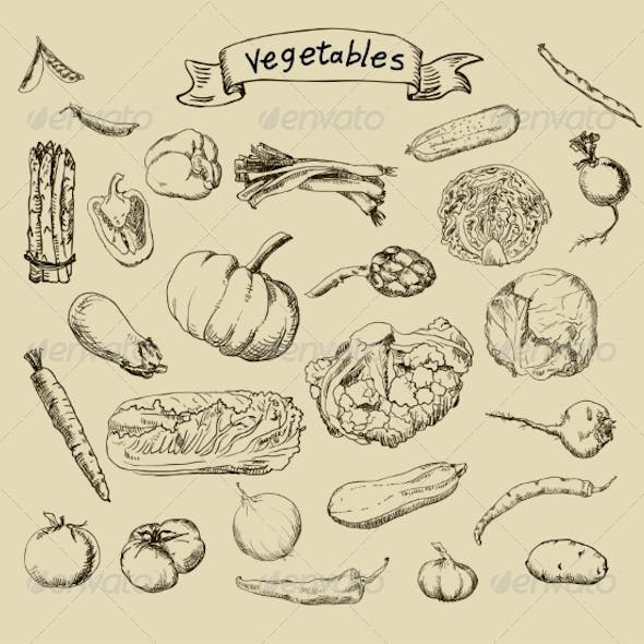 Vegetable Sketches