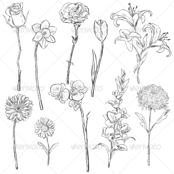 Vector Set of Sketch Flowers