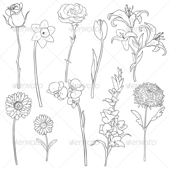 Vector Set of Outline Flowers
