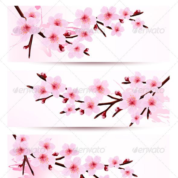 Banners with Sakura Branches
