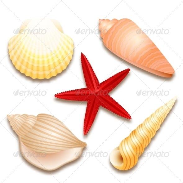 Seashells Set and Starfish