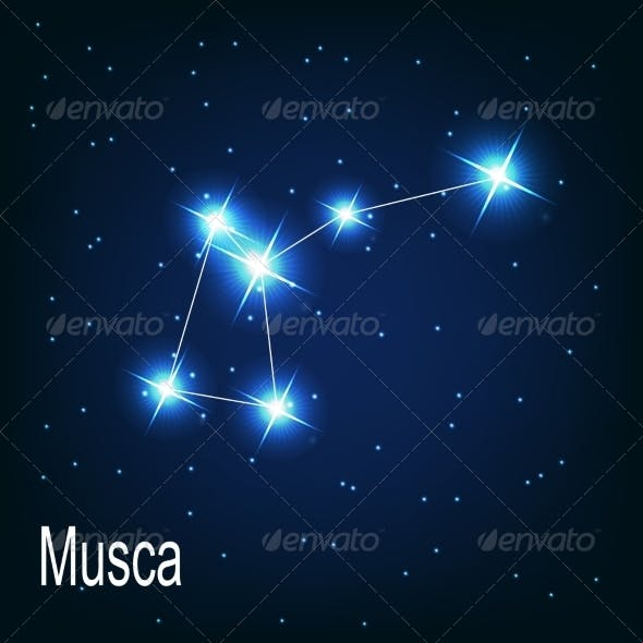The Constellation Musca