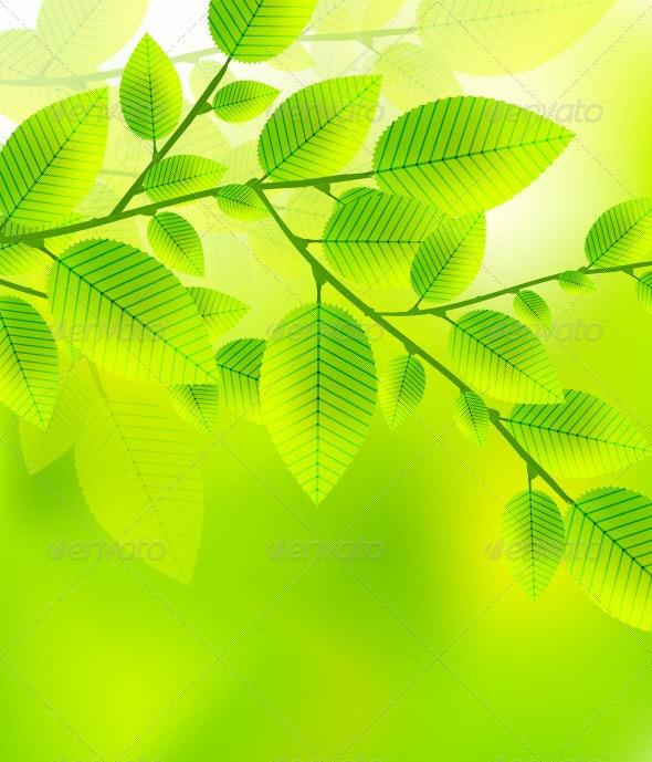 Leaf branch - Landscapes Nature