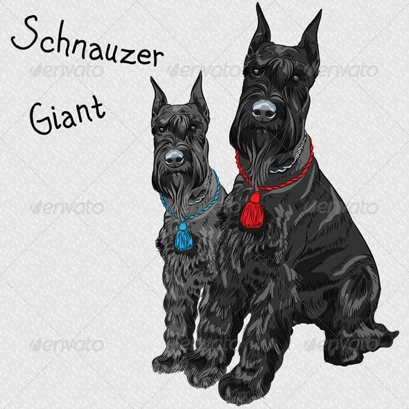 Black Giant Schnauzer Dog Sitting - Animals Characters