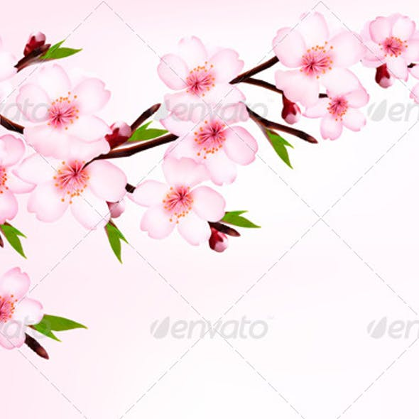 Spring Background of a Blossoming Tree Branch