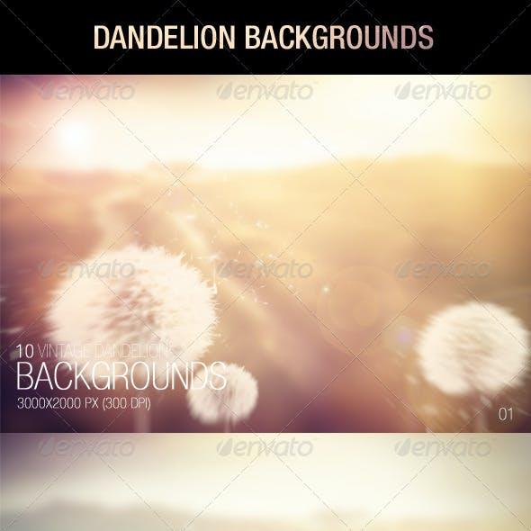 Dandelion Backgrounds