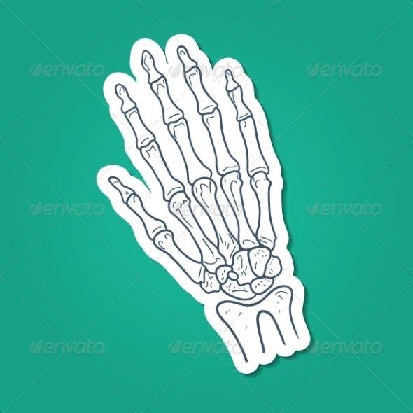 Bones of Hand - Skeleton Part