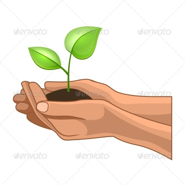 Hands and Plant on White Background