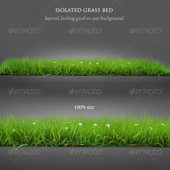 Isolated Grass