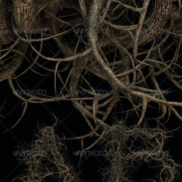 Roots Tree Alphabet