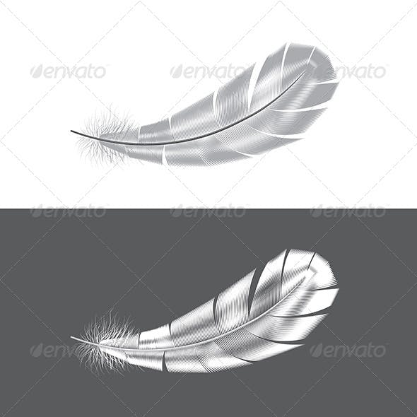 Grey and White Feathers