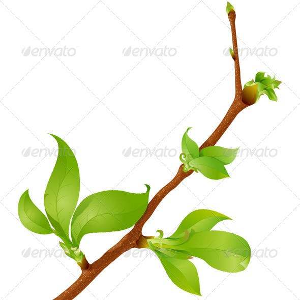 Highly Detailed Spring Branch
