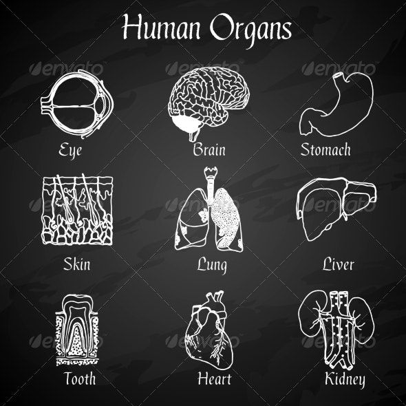 Human Organs Chalkboard Icons - Abstract Icons