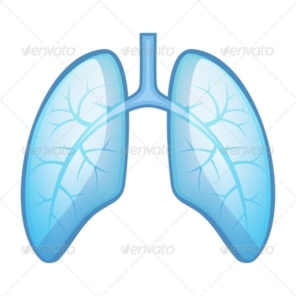 Human Health Lungs and Bronchi  - Health/Medicine Conceptual
