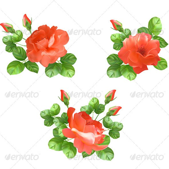Flower Rose Collection