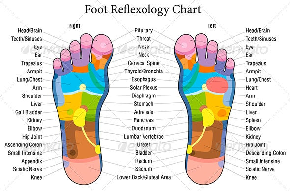 Foot Reflexology Chart Description on foot odor, foot index, foot and ankle, foot pain, foot structure, foot schematic, foot problems, foot regions, foot type chart, foot outline, foot assessment form, foot tendons, foot cartoon, arches of the foot, joints of foot, foot parts, anatomical terms of location, foot muscles, foot side view, foot map, foot bones, foot drawing, fifth toe, foot toes,