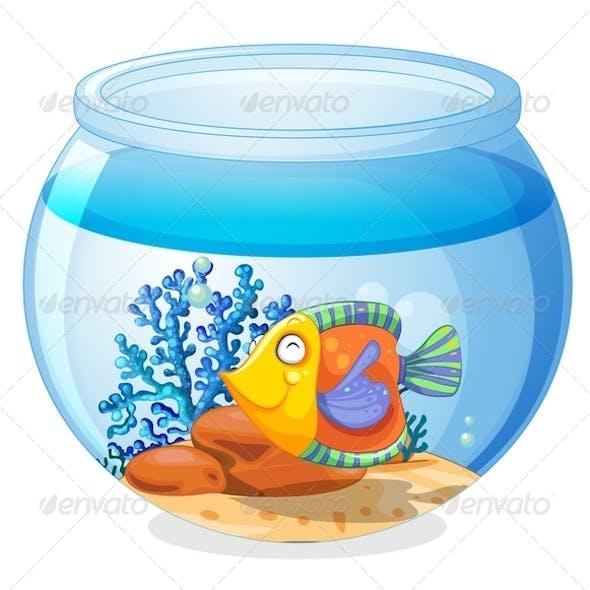 An aquarium with a fish