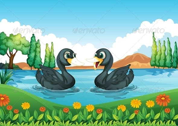 River with two ducks
