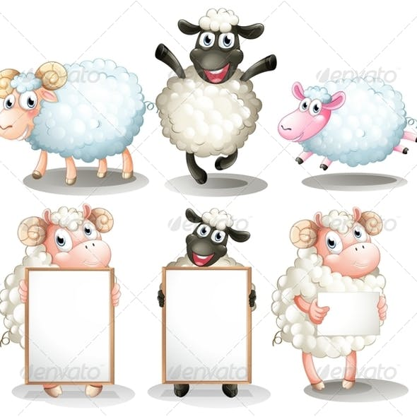 Sheep and lambs with empty boards
