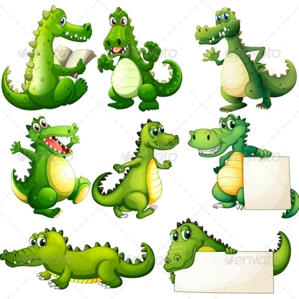 Eight Crocodiles