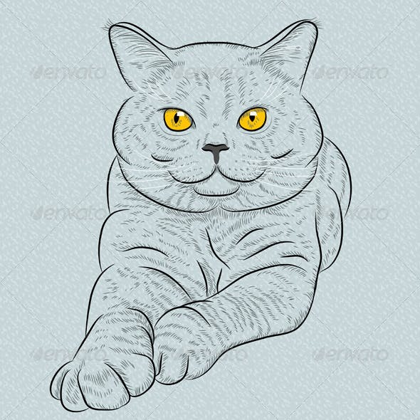 British Shorthair Blue Cat Lies and Looks