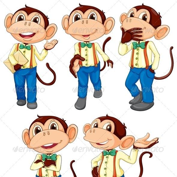 Five monkeys wearing blue jeans