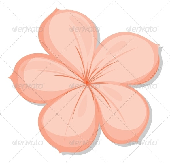 Five-Petal Flower - Flowers & Plants Nature